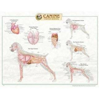 Canine Internal Organ Anatomy Chart: Explore similar items