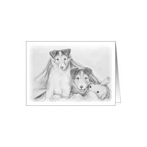 Sheltie Puppies Under Blanket with Toy Teddy Bear Card