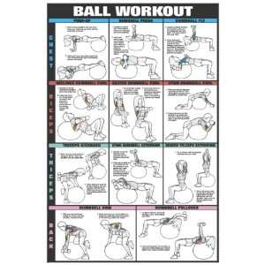 Co ed Swiss Ball Workout I 24 X 36 Laminated   Chest, Biceps