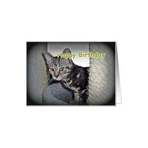 Kitten on Tree    Happy Birthday Best Buddy Card Toys & Games