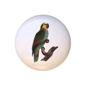 Birds Blue Fronted  Parrot Drawer Pull Knob: Home