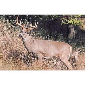 Tru Life Paper Targets Boss Buck