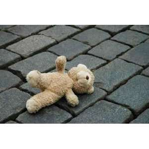 Little Teddy bear Laying on the Cobblestones   Peel and