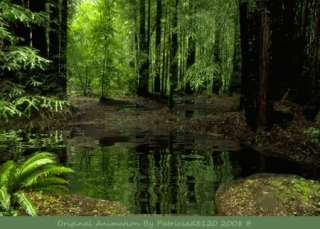 Animated Rainforest With Nature Sounds Beautiful Look