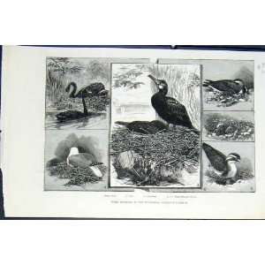 Birds Building Zoo London Bird Cormorant Swan Peewit: Home