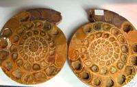 Cut and Polished Ammonite Fossil Pair Madagascar HOT