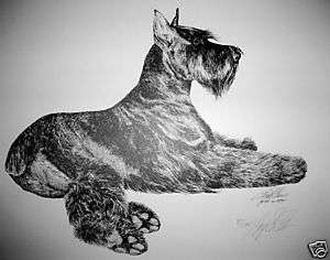 Giant Schnauzer Elegance By Lyn St.Clair