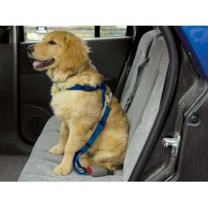 Guardian Gear Royal Blue Dog Safety Seat Belt Harness Car