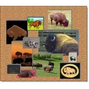 Buffalo Clip Art & Stock Photos: Software
